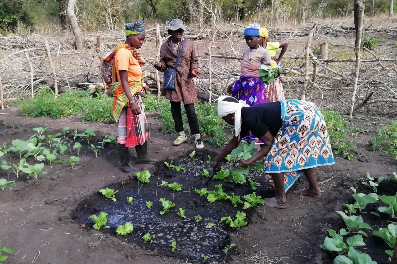 Contadine mozambicane lavorano in un campo